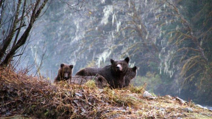 Great Bear 3