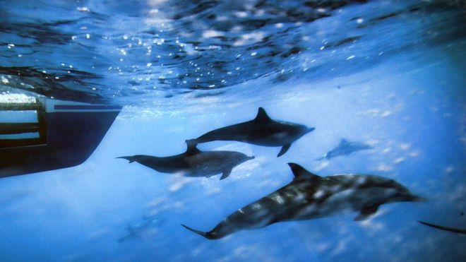 island of the blue dolphins article