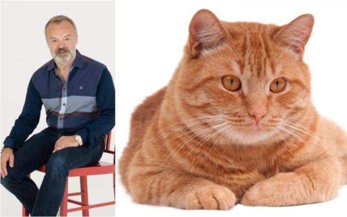 graham-cat-large