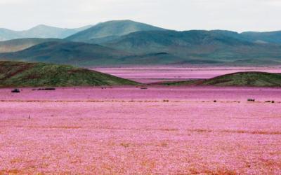 Atacama-Desert-EFE-large
