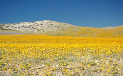 Wildflowers-Utah-Desert-Ala-large