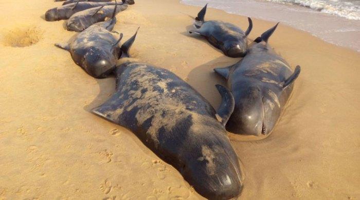 chennai-whale-bodies-759