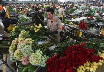 Colombian-flower-packinghouse