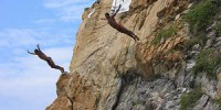 75_cliff_divers_acapulco