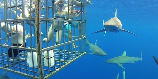 04_sharks_outside_cage