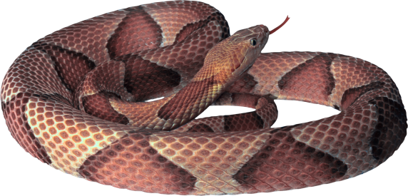 snake_png4065