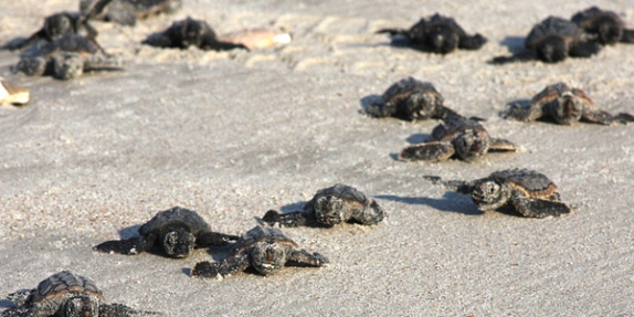 64_lejeune_home_to_many_threatened_endangered_species_110901-m-iy869-001