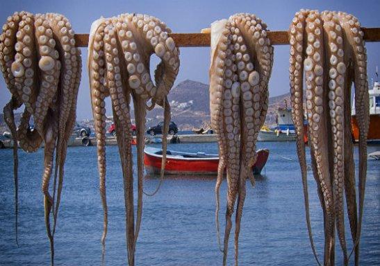 octopus-titlea