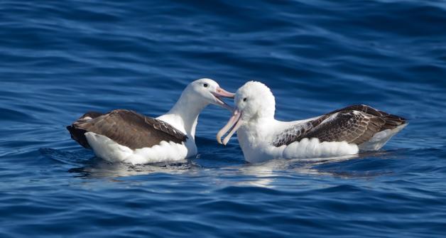 860_main_seabirds